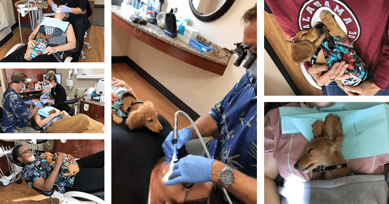 Montage of photos of Steve, our dental thearphy dog, with patients.
