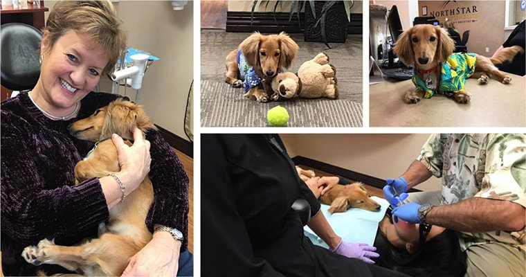 Collage of dental therapy dog, Dr. Steve, helping patients relax and stay calm during dental work.